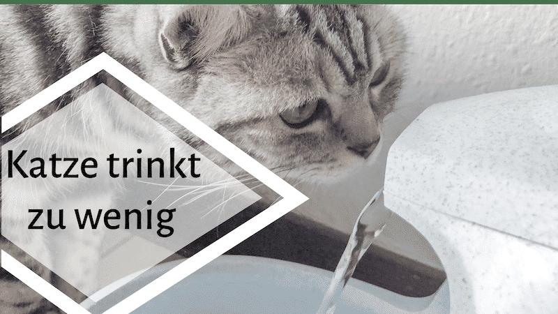 Meine Katze Trinkt Nicht Genug Was Tun Kleinstadttiger